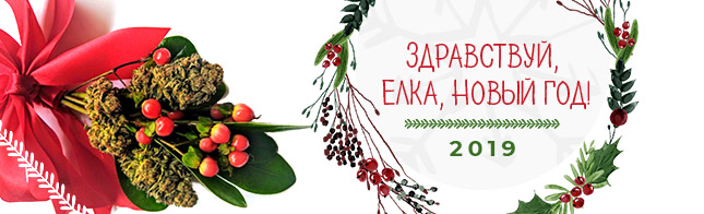 Здравствуй, Елка, Новый год!