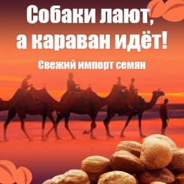 Собаки лают, а караван идёт! Свежий импорт семян!