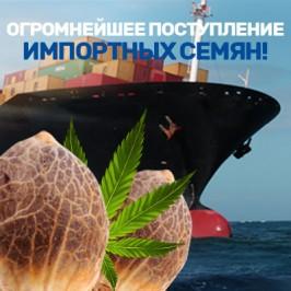 Огромнейшее поступление импортных семян!