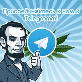 Присоединяйтесь к нам в Telegram!