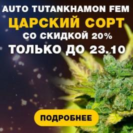 Авто Тутанхатон фем от Украинских бридеров