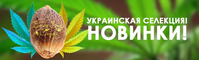 Украинская селекция! Новинки!