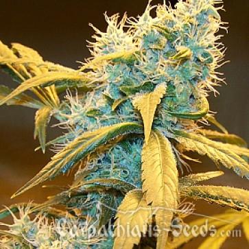 Через сколько взойдут семена марихуаны как можно бросить курить марихуану