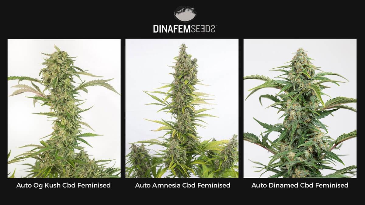 Торговая площадка семенами конопли как определить что человек курил марихуану