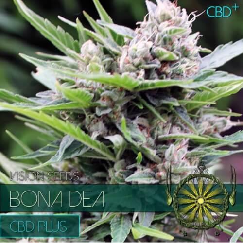 Семена марихуаны cbd Vision Seeds