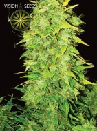 Auto White Widow Feminised - image